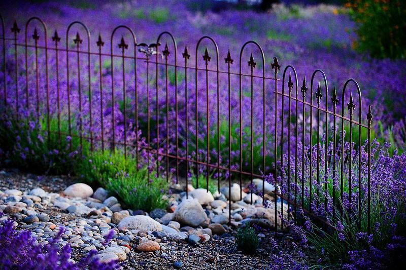 Lavender Wrought Iron