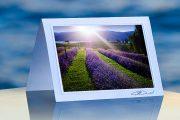 Lavender Sunlit_prod