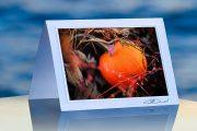 Pumpkin in weeds_prod
