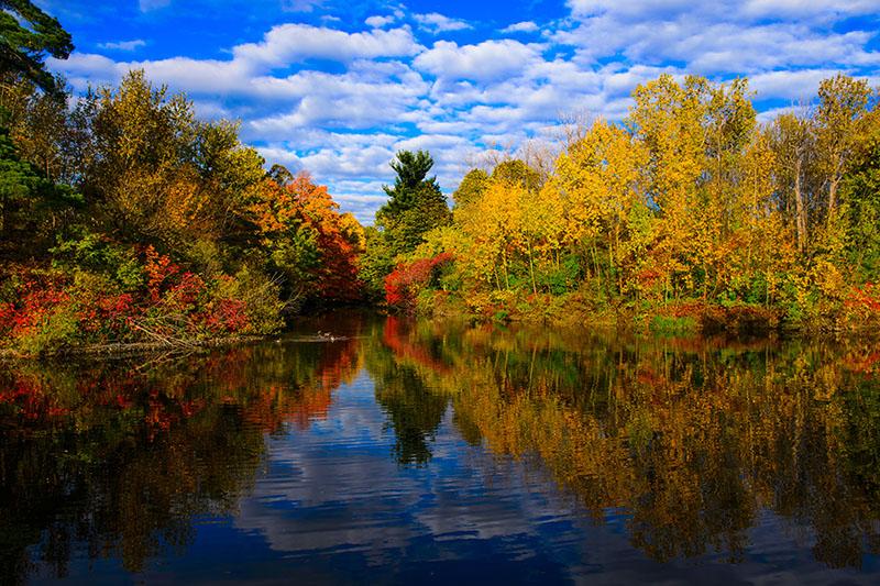 Blazing Pond