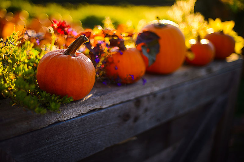 Pumpkin Perch