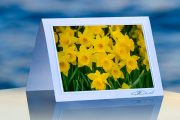 Crowd of Daffodils_prod
