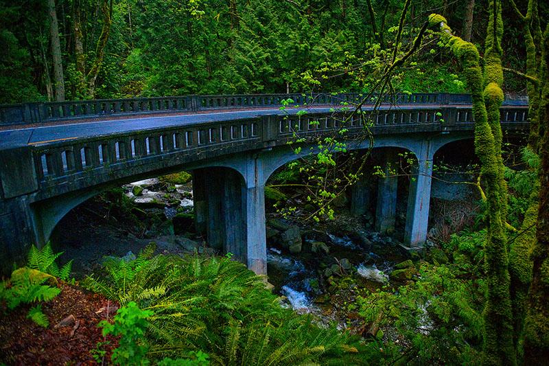 Rainforest Bridge