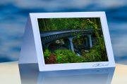 Rainforest Bridge_prod