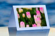 Spring Blush_prod