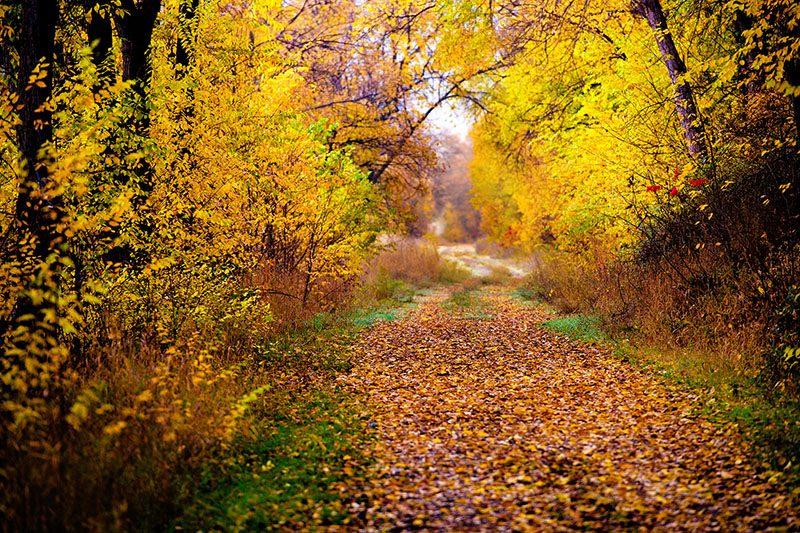 Dreamy Fall Walk