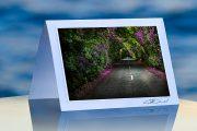 Blossom Way_prod