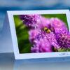 Spring Bee_prod