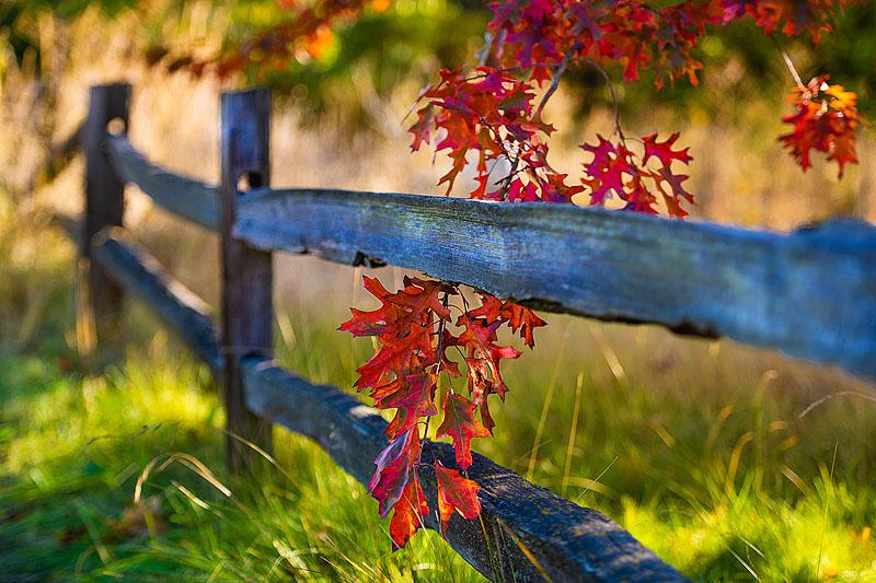 Red Oak & Fence