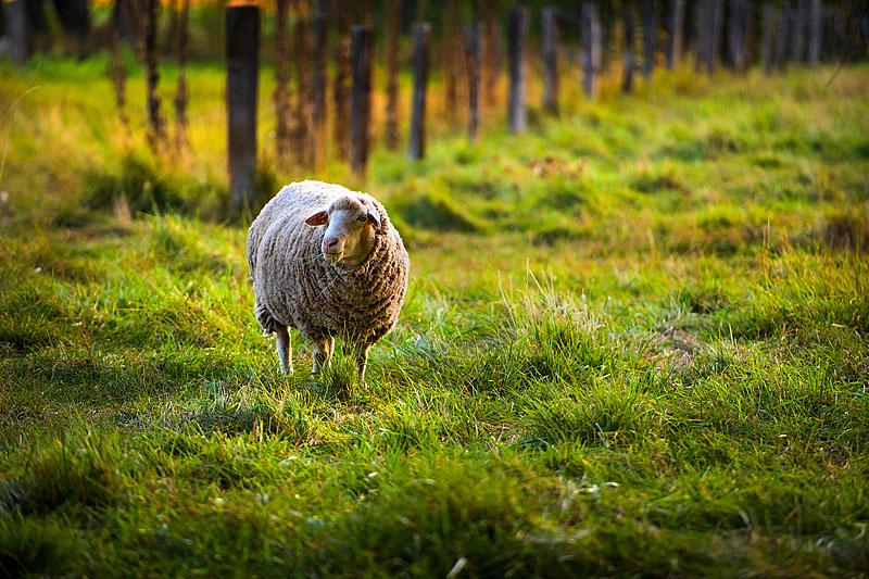 Wooly Friend