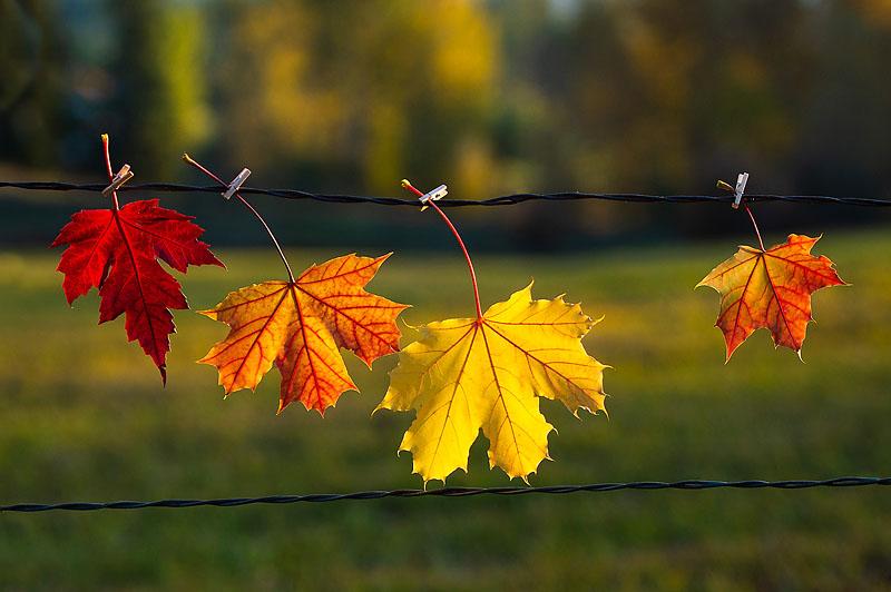 Four Lovely Leaves
