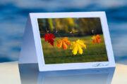 Four Lovely Leaves_prod