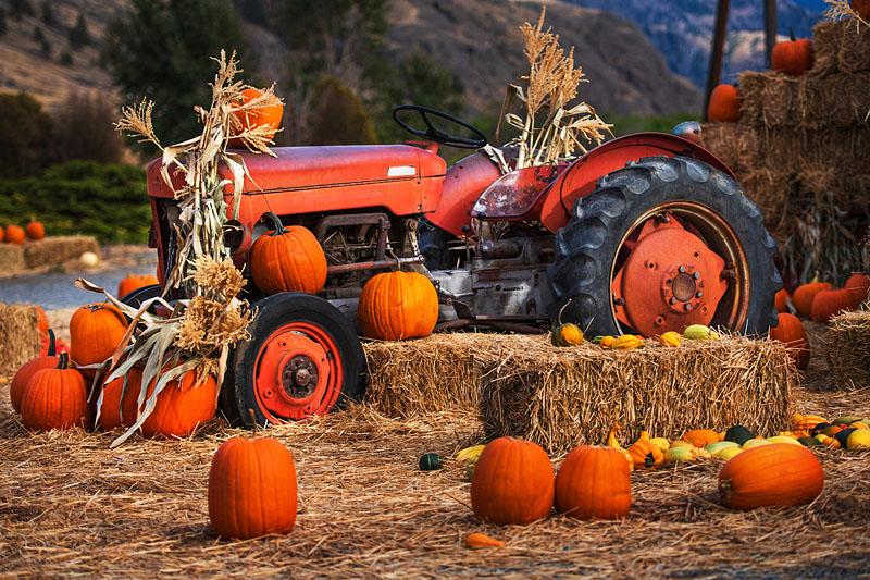 Handsome Harvest