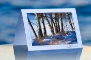 Winter Aspens_prod
